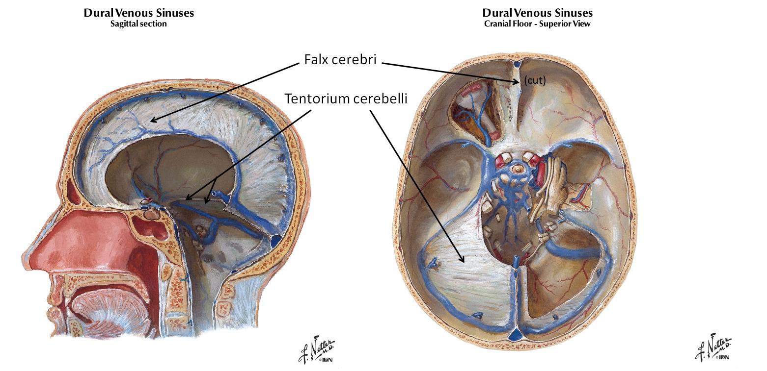 CranialFacialRelease -
